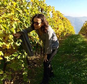 wine tour vineyard retreat
