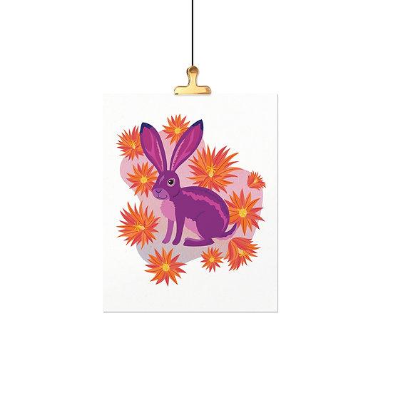 Sonoran Desert Animals - Jack Rabbit