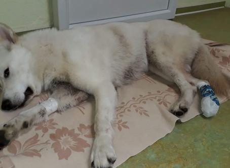 Notdienst oder wenn Tierbesitzer und Tierärzte verzweifeln
