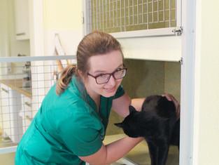 Tierärztin Anja Eigensser auf der Station mit einer schwarzen Hauskatze der Tierarztpraxis im Zentrum Leipzig West