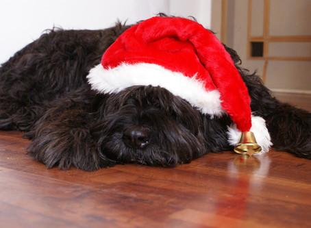 Alle Jahre wieder- oder die Gefahren der Weihnachtszeit