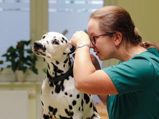 Tierärztin Anja Eigenseer bei der Ohrenuntersuchung eines Hundes
