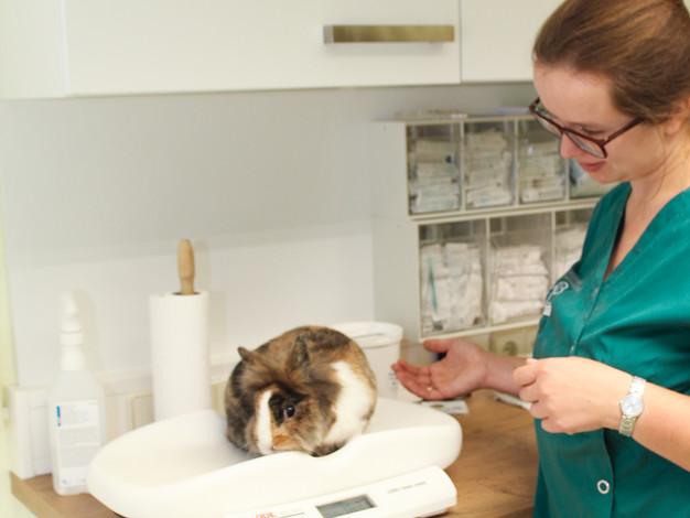 Tierärztin Anja Eigenseer mit Zwerkaninchen auf der Kleintierwaage