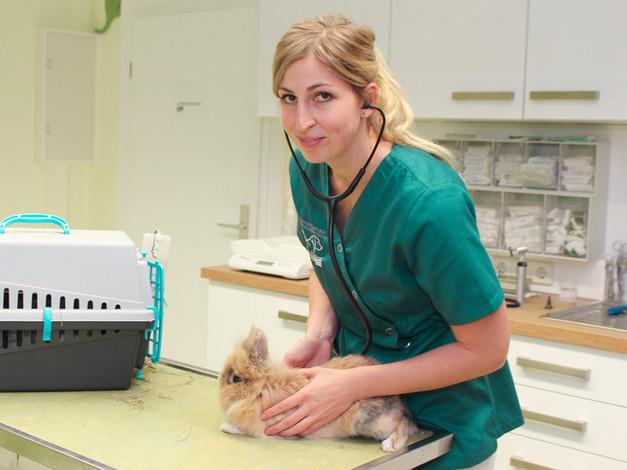 Tierärztin Melanie Schwarze bei der Untersuchung von einem Löwenköpfchen Zwergkaninchen