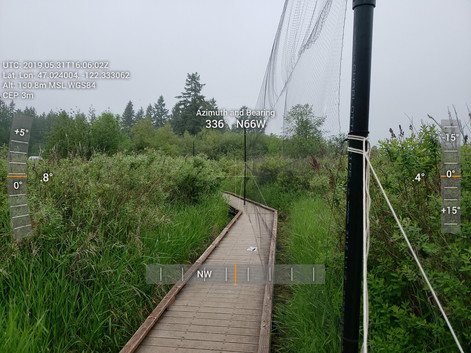 Mist nets on the boardwalk at the Morse Wildlife Preserve in Graham.