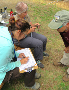 Banders working to band a bird during the PSBO banding course in Edmonds.