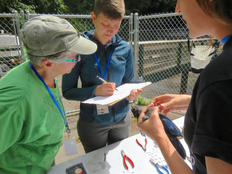 The bander and the scribe work together under the guidance of Christine Southwick, banding course instructor.