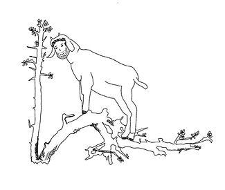 Matthew-Shribman-Polly-Gregson-Goat.jpg