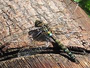 insectos beneficiosos, humedal chicú, ecología urbana Gran Chicó