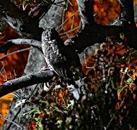 Gran Chicó, parque El Virrey, Ecología urbana en bogotá, fauna urbana
