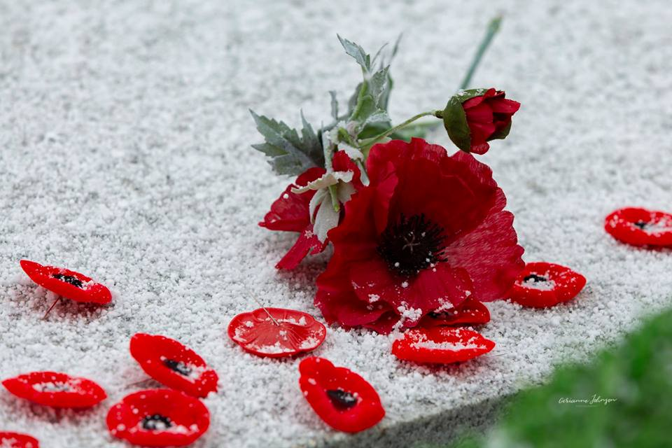 Poppies Cenotaph  Remembrance 2018