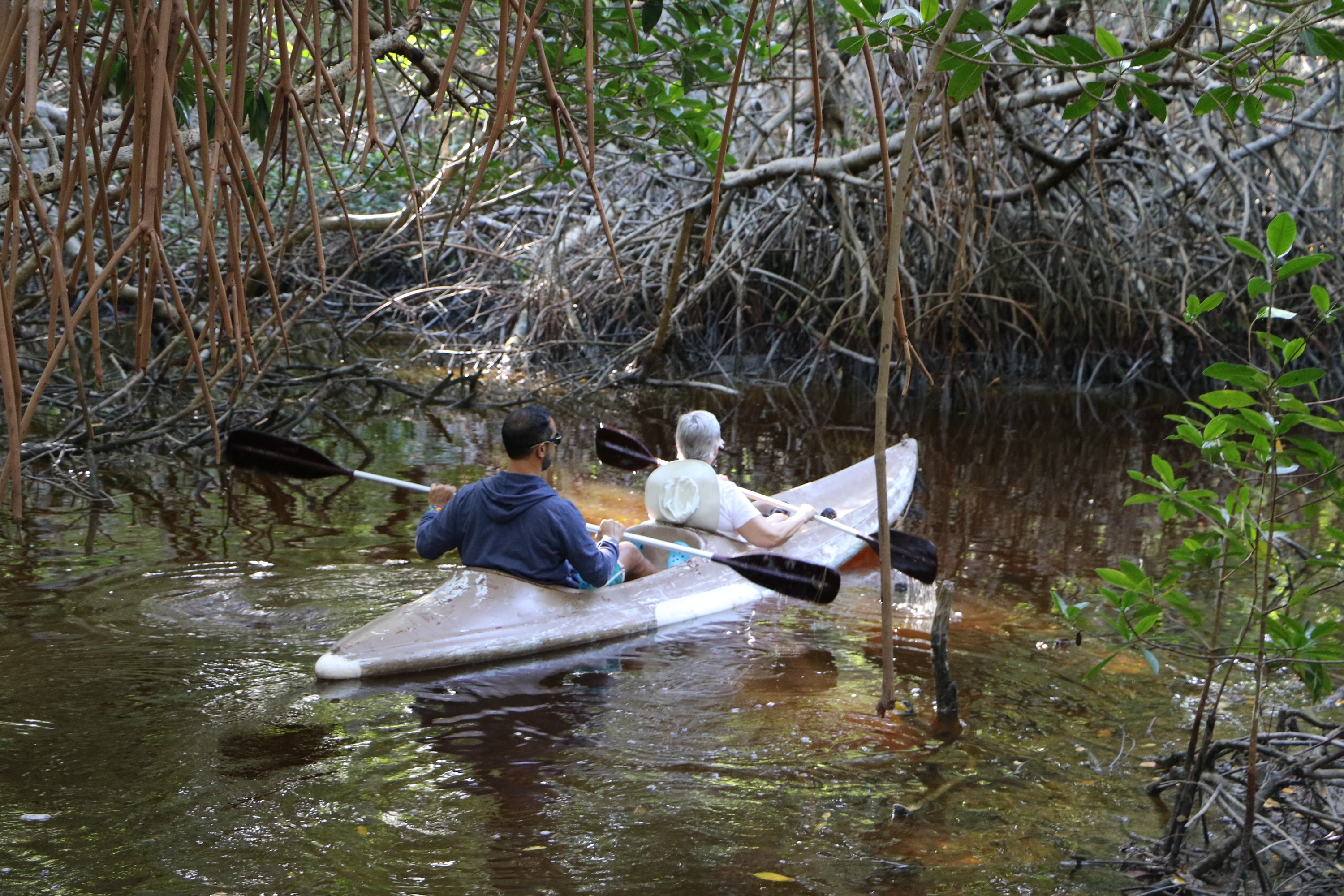 Kayak in the Mangrove