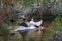 Kayak in the Mangrove