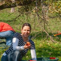 Apfelernte in Ockershausen
