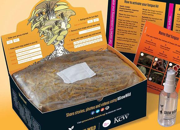 Free Grow Wild Mushroom Kit