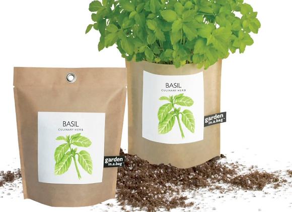 Free Basil Seed Kit