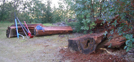 "Old growth Redwood ""buckskins"""