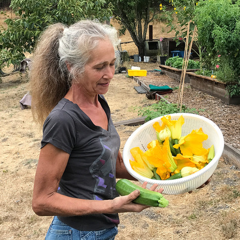 Hilary harvesting young zucchini with flowers