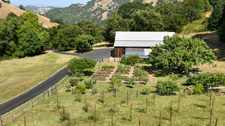 View from deck of olive trees, garden beds and barn