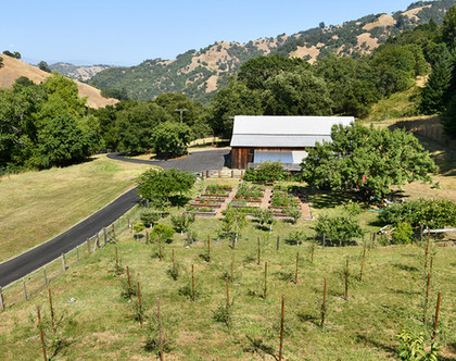 Olive trees and vegetable garden