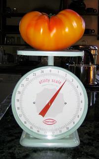 A 2 lb tomato!