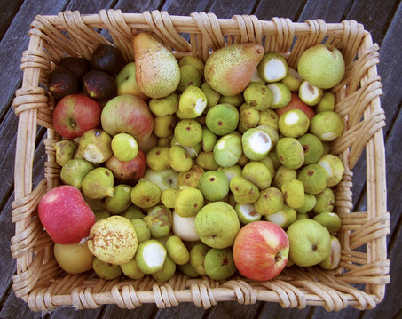 Apple, pears, black and white figs