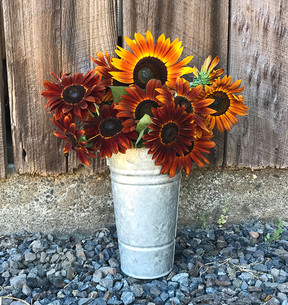 Our favorite sunflowers