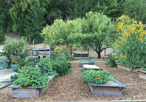 15 redwood raised beds