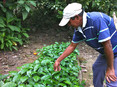 Coffee farmers battle rust, debt and market challenges