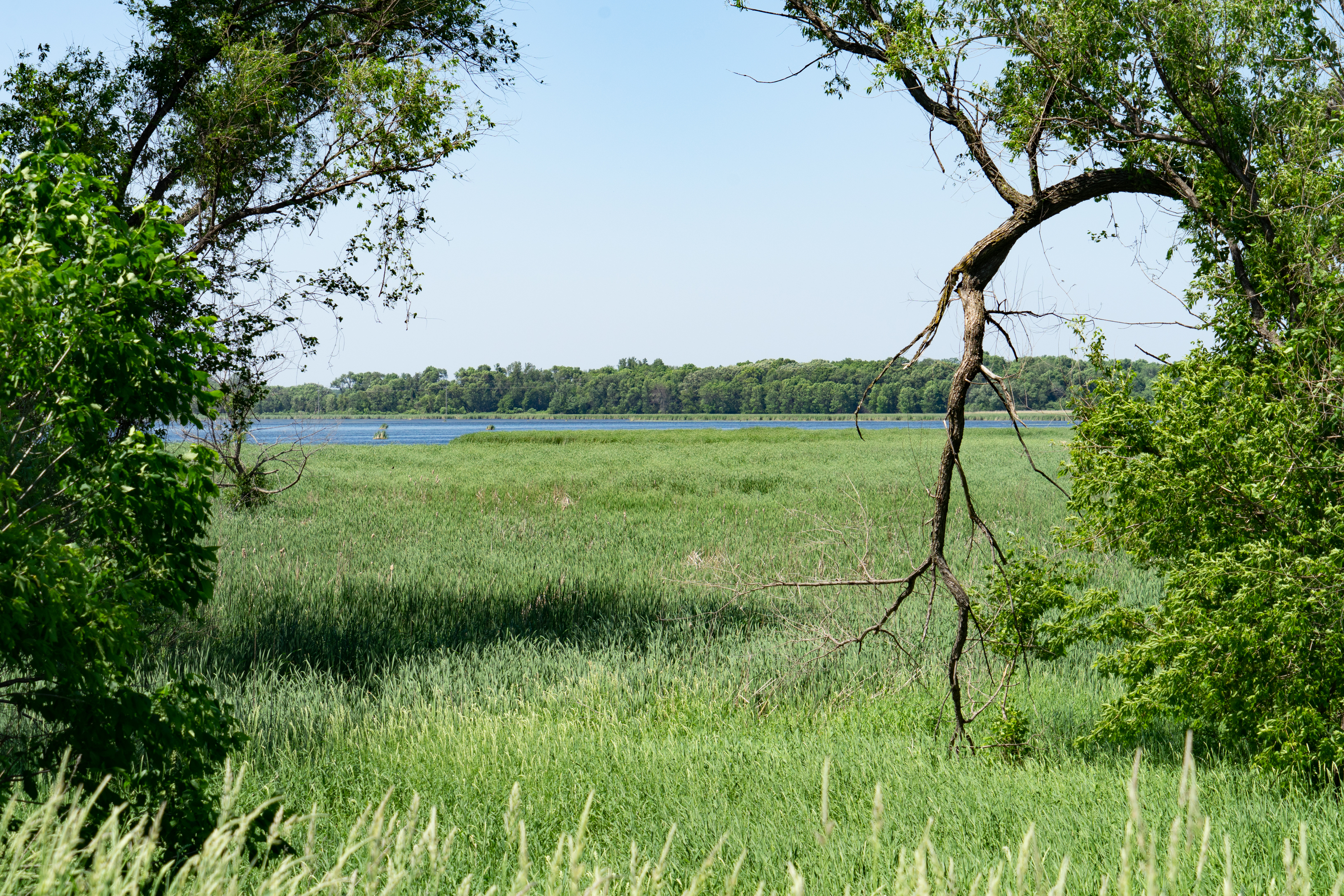 Vegetation along shoreland - June 2020