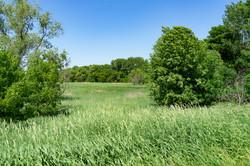 Vegetation by shoreland - June 2020