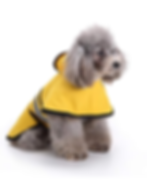 rain coat 2.png
