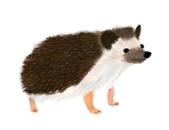 Hedgehog © mina chape