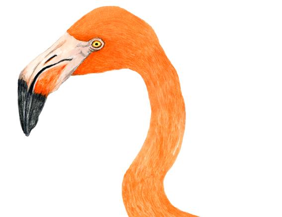 Flamingo © mina chape