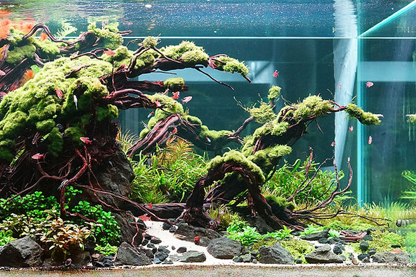 Aquascaping - Dave Chow.jpg
