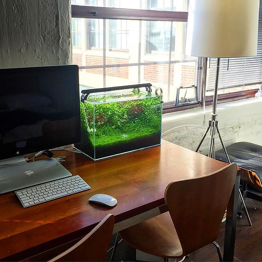 Aquascaping home office.jpg