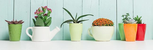 houseplants_g.jpg.jpg
