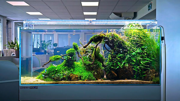 Aquascaping - Office Space.jpg