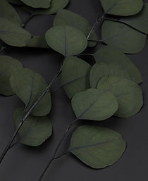 eucalyptus-populus-close-up-NEW-GREEN.jp