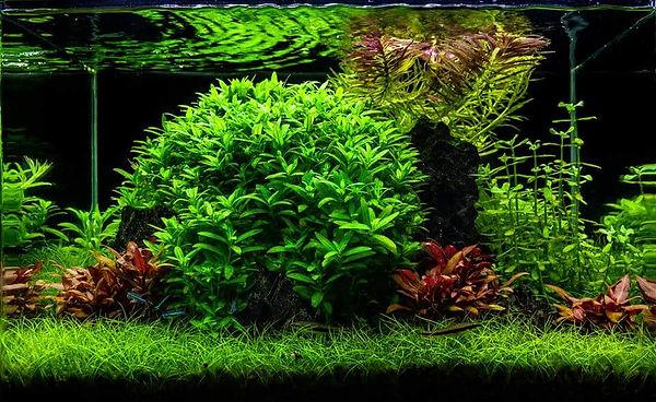 Aquascaping - Art.jpg
