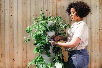lettuce-grow-z4S0MYNYT08-unsplash.jpg