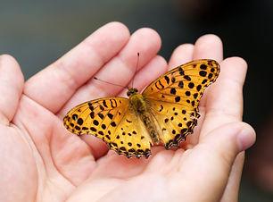butterfly-4396444.jpg