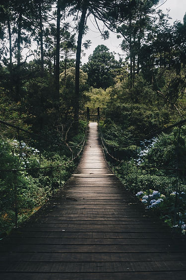 black-hanging-bridge-surrounded-by-green