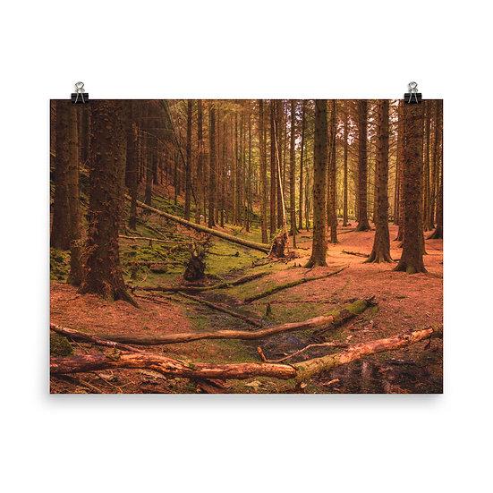 Forest Peak District Beautiful Landscape Print