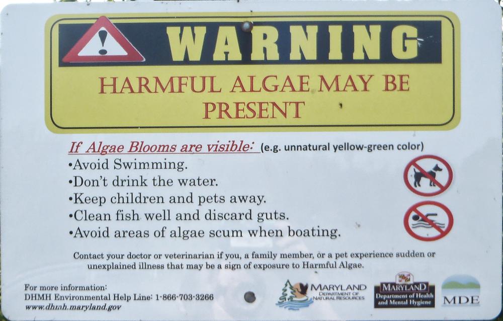 Algal Bloom Warning