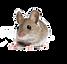 Mouse Control Utah