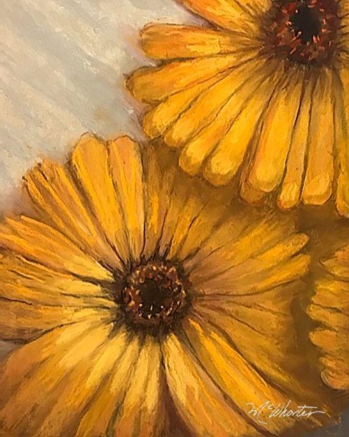 Yellow Calendulas 2