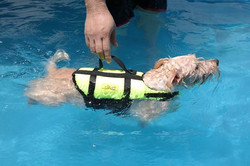 swim-005.jpg