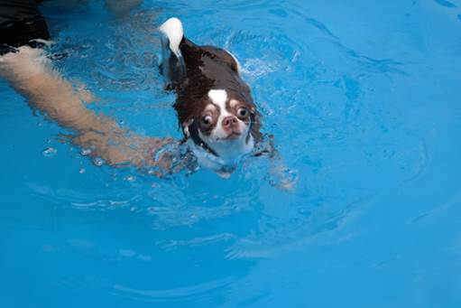 swim-003.jpg