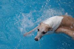 swim-004.jpg